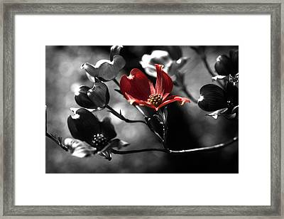 Let There Be Color Framed Print by Bonnie Bruno
