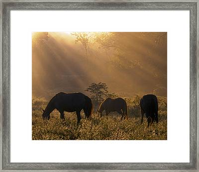 Let There Be Light Framed Print by Ron  McGinnis