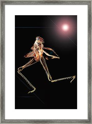 Lets Dance 001 Framed Print by Kevin Chippindall