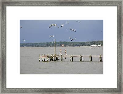 Let's Go See The Birds Framed Print by David Dittmann