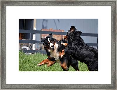 Lets Play Framed Print by Paulette Hawkins