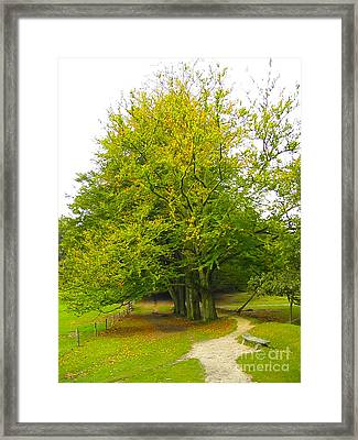 Lets Take A Seat Here Framed Print by Go Van Kampen
