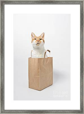 Letting The Cat Out Of The Bag Framed Print by Catherine MacBride