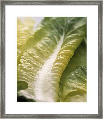 Lettuce Leaf Framed Print by Sheila Terry