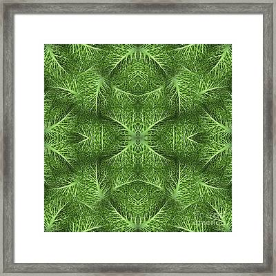 Lettuce Live Green  Framed Print by Sue Duda