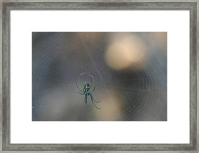 Leucauge Venusta Framed Print by Sean Green