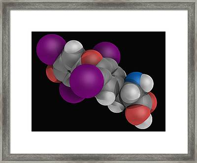 Levothyroxine Drug Molecule Framed Print by Laguna Design