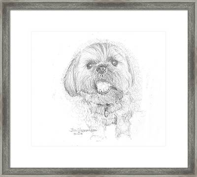 Lhasa Apso Framed Print by Jim Hubbard