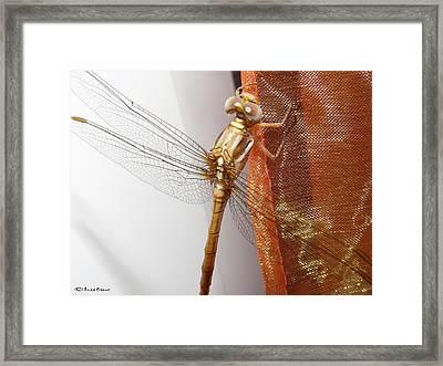 Libelula Framed Print by Luis oscar Sanchez