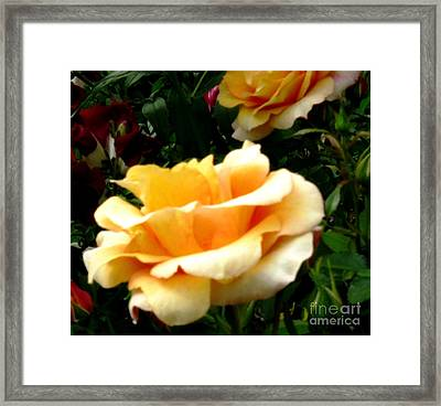 Liberty Framed Print by Judyann Matthews