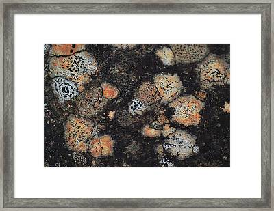Lichen Abstract Framed Print by Susan Capuano