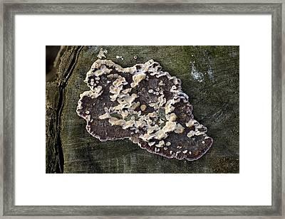 Lichen On A Tree Framed Print by Dirk Wiersma