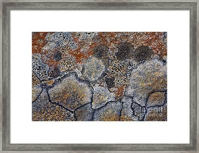 Lichen Pattern Series - 4 Framed Print