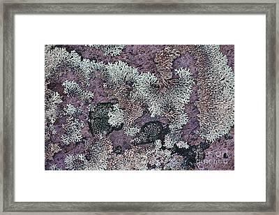 Lichen Pattern Series - 57 Framed Print by Heiko Koehrer-Wagner