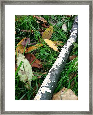 Lichen Recycling Framed Print by Trish Hale