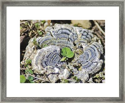 Lichen The Shamrock Framed Print