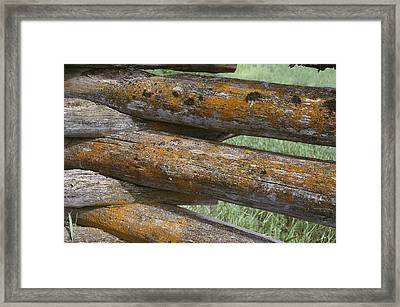 Lichens Growing On A Corral Fence Framed Print by Stephen Sharnoff