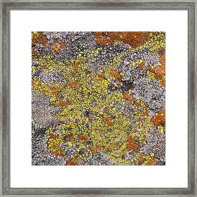 Lichens Framed Print by Heidi Smith