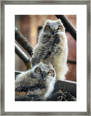 Life After People Framed Print by Lori Deiter
