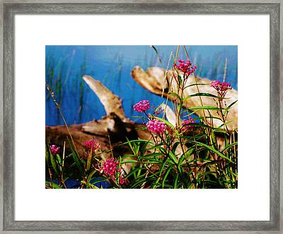 Life And Death Framed Print by Virginia Lei Jimenez