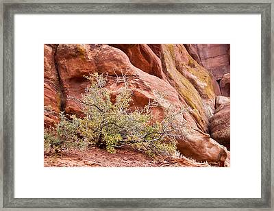 Life At Red Rocks Framed Print