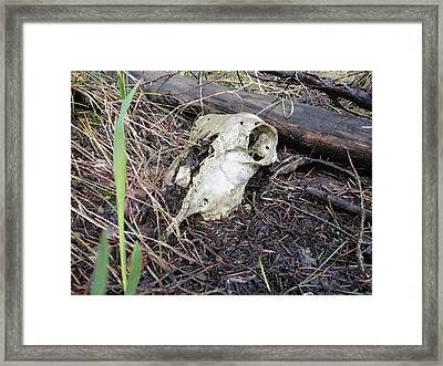 Life Cycle Framed Print by S Westerberg