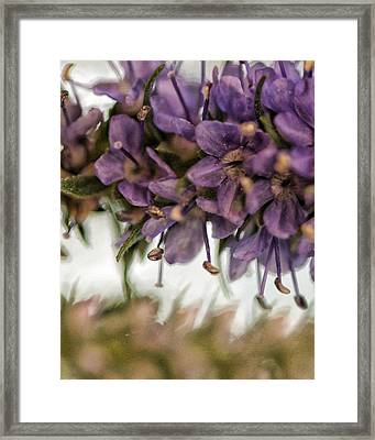 Life Goes On Framed Print