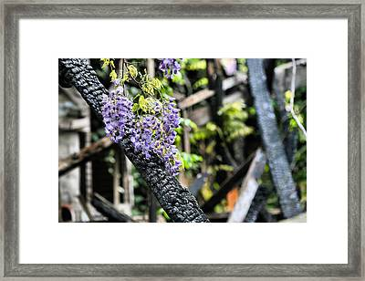 Life Goes On Framed Print by JC Findley