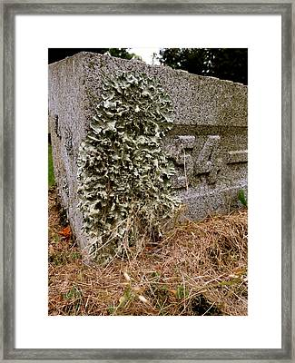 Life In Death Framed Print