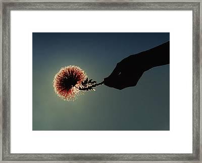 Life In My Hand Framed Print by Francesco Nadalini