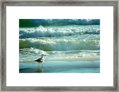 Framed Print featuring the photograph Life Is A Beach........ by Tanya Tanski