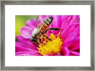Life Is Full Of Beauty Framed Print by Sarai Rachel