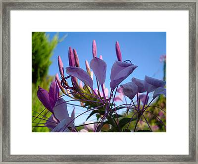 Life Is Good Framed Print by Victoria Ashley
