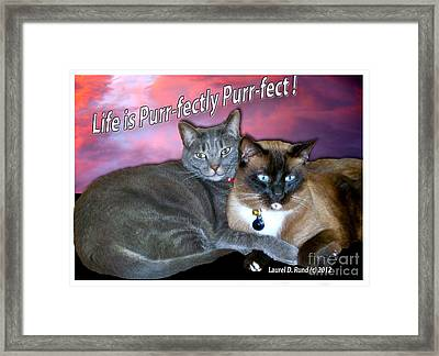Life Is Purrfectly Purrfect Framed Print
