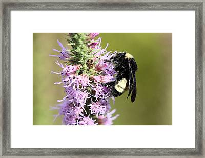 Life Of A Bee Framed Print by Laura Oakman
