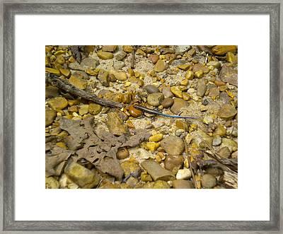 Life Rocks Framed Print by Tessa Priddy