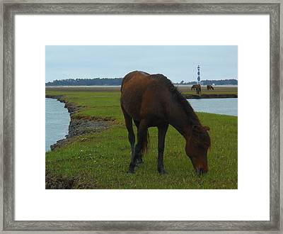 Life Without Fences Framed Print by Jeff Moose