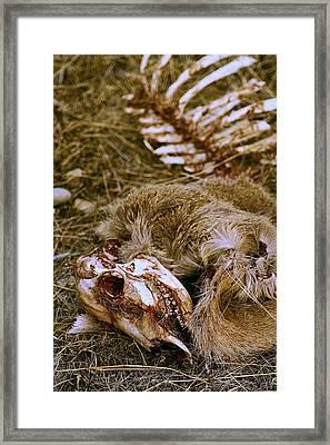 Lifecycle Framed Print by William Kelvie