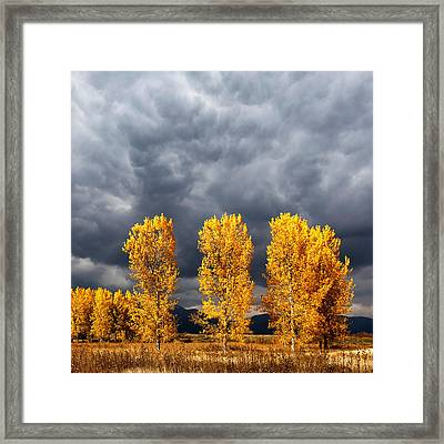 Light And Darkness Framed Print by Evgeni Dinev