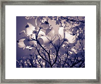 Light And Shadow Play Framed Print by Victoria Ashley