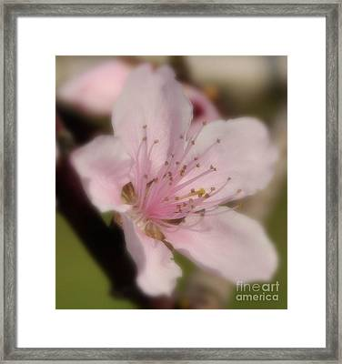Light As A Feather Framed Print by Tamera James