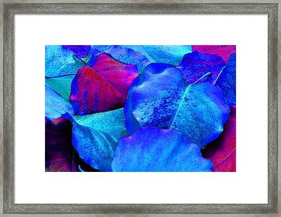 Light Blue And Fuchsia Leaves Framed Print by Sheila Kay McIntyre