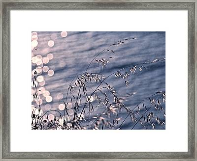 Light Bubbles And Grass Framed Print by Jocelyn Kahawai