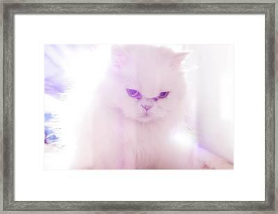 Light Cat Framed Print by Luis Hernández Diaz