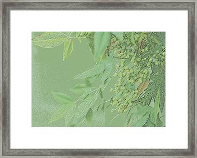 Light Green Monotone Berries Framed Print by Linda Phelps