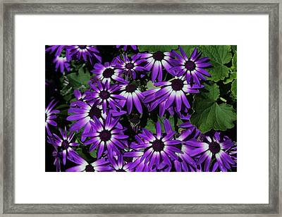 Light In The Middle  Framed Print