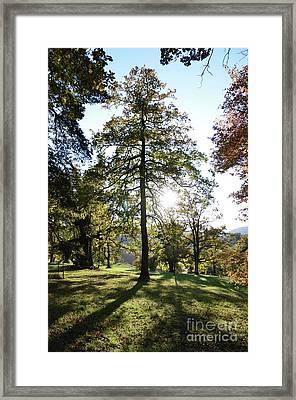 Light In Tree Framed Print