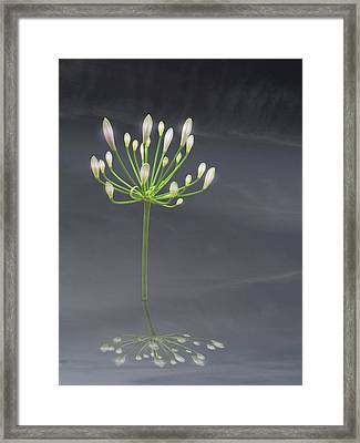 Light Of Dreams Framed Print by Michael Taggart