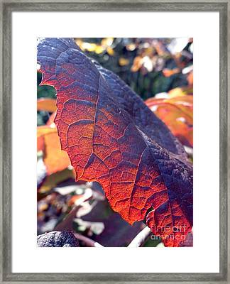Light Of The Lifeblood Framed Print by Trish Hale