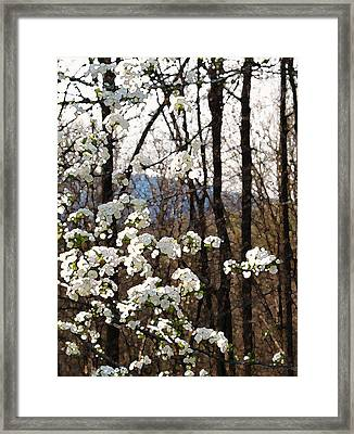 Light Rejoicing Framed Print by Katharine Birkett
